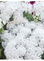 Агератум Белый шар 0.1 гр