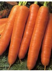 Морковь Королева осени 2 гр
