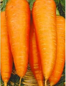 Морковь Московская зимняя