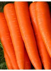 Морковь Витаминная 2 гр