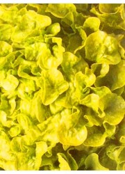 Салат Берлинский желтый