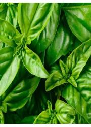Базилик Зеленый ароматный 0.3 гр