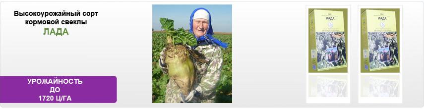 Технология по выращивание укроп 143