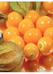 Физалис ягодный Янтарь 0.1 гр