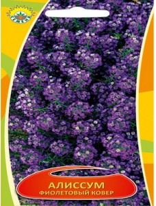 Алиссум Фиолетовый ковер