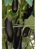 Баклажан Дестан F1 -  500 шт семян