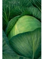 Капуста белокочанная Байонет F1 -  2500 шт семян