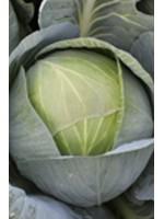 Капуста белокочанная Циркон F1 -  2500 шт семян