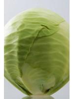 Капуста белокочанная Парадокс F1 -  2500 шт семян