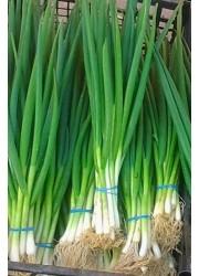 Лук на перо Параде -  10000 шт семян