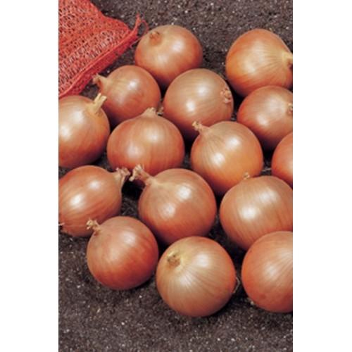 Франциско - лук репчатый, 250 000 семян, nickerson zwaan