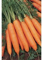 Морковь Бангор F1 (1,6-1,8 мм) -  25000 шт семян