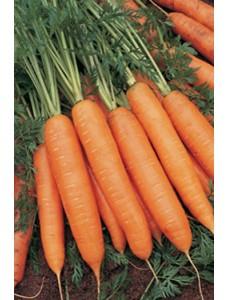 Морковь Бангор F1 (1,6-1,8 мм) -  100000 шт семян