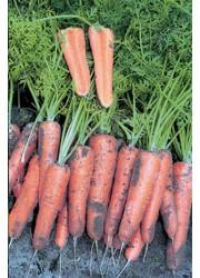 Морковь Канада F1 (1,6-1,8 мм) -  100000 шт семян