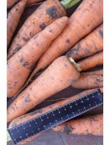 Морковь Каскад F1 (1,8-2,0мм) -  500000 шт семян