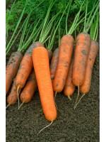 Морковь Найджел F1 (1,8-2,0мм) -  100000 шт семян