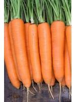 Морковь Намдал F1 (1,8-2,0мм) -  100000 шт семян