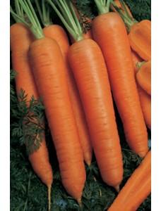 Морковь Наполи F1 (1,8-2,0мм) -  100000 шт семян