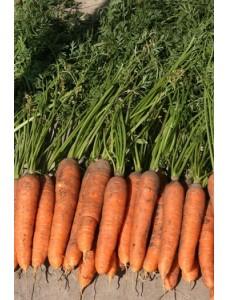 Морковь Навал F1 (1,8-2,0мм) -  100000 шт семян