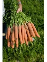Морковь Нерак (1,6-1,8 мм) -  500000 шт семян