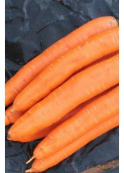 Морковь Нью хол F1 (1,8-2,0мм) -  500000 шт семян