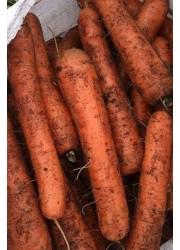Морковь Рамосса -  500 гр семян