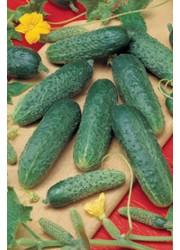 Огурец Астерикс F1 -  50 гр семян