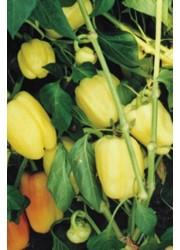 Перец Бианка F1 -  500 шт семян