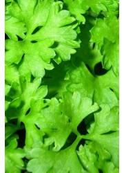 Петрушка Аргон -  250 гр семян