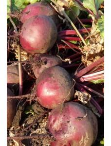 Свекла Бикорес -  10 кг семян