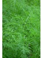 Укроп Голдкроне -  250 гр семян