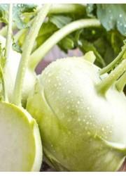 Капуста кольраби Деликатесная белая 0.5 гр