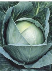 Капуста белокачанная  Урожайная 0.5 гр