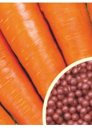 Морковь Королева осени в гранулах 300 шт