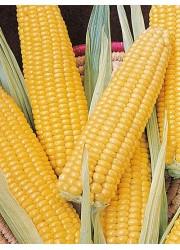 Кукуруза Лакомка 5 гр