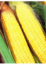 Кукуруза Ранняя лакомка 121 4 гр