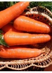 Морковь Лакомка 4 гр