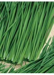 Лук шнитт Богемия на зелень 0.5 гр