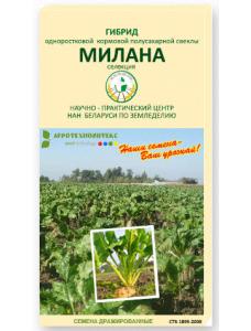 """Полусахарный гибрид - """"МИЛАНА"""""""