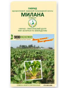 """Полусахарный гибрид - """"МИЛАНА""""  (инкрустированные семена)"""