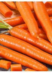 Морковь Чемпион F1 0.3 гр