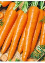 Морковь Хрустяшка 1г