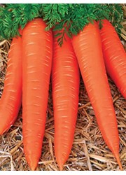 Морковь Карамелька 2 гр