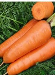 Морковь Красная боярыня 2 гр