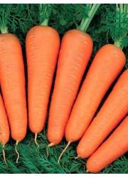 Морковь Красная Боярыня 50 грамм