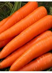 Морковь Лакомка  сеялка 4 гр