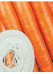 Морковь на ленте Амстердамска  8 м