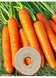 Морковь на ленте Нантская  4  8 м