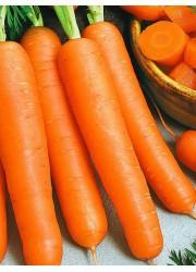 Морковь Намур F1 200 шт