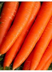 Морковь Вкус детства 2 гр